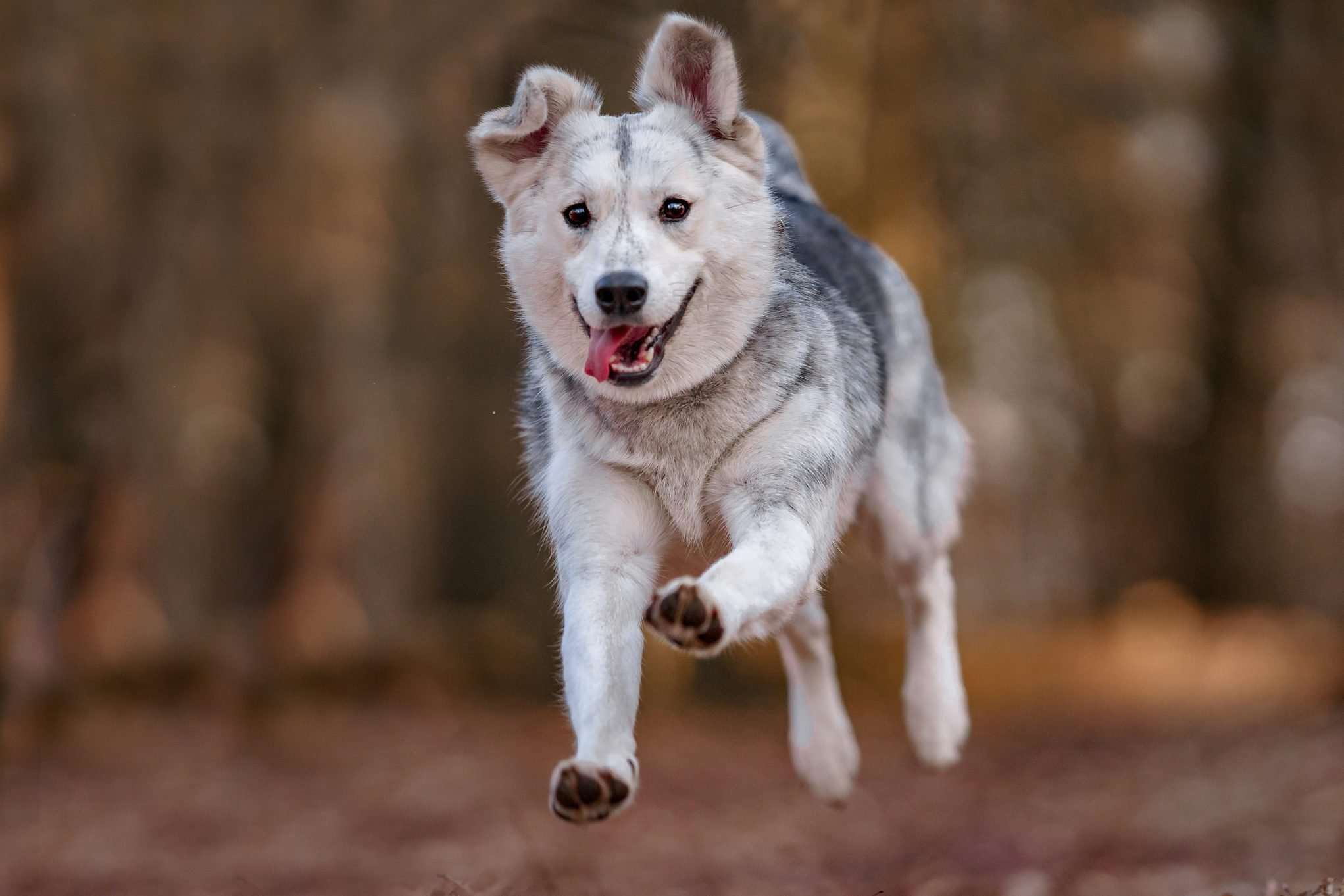 Mixed breed dog portrait