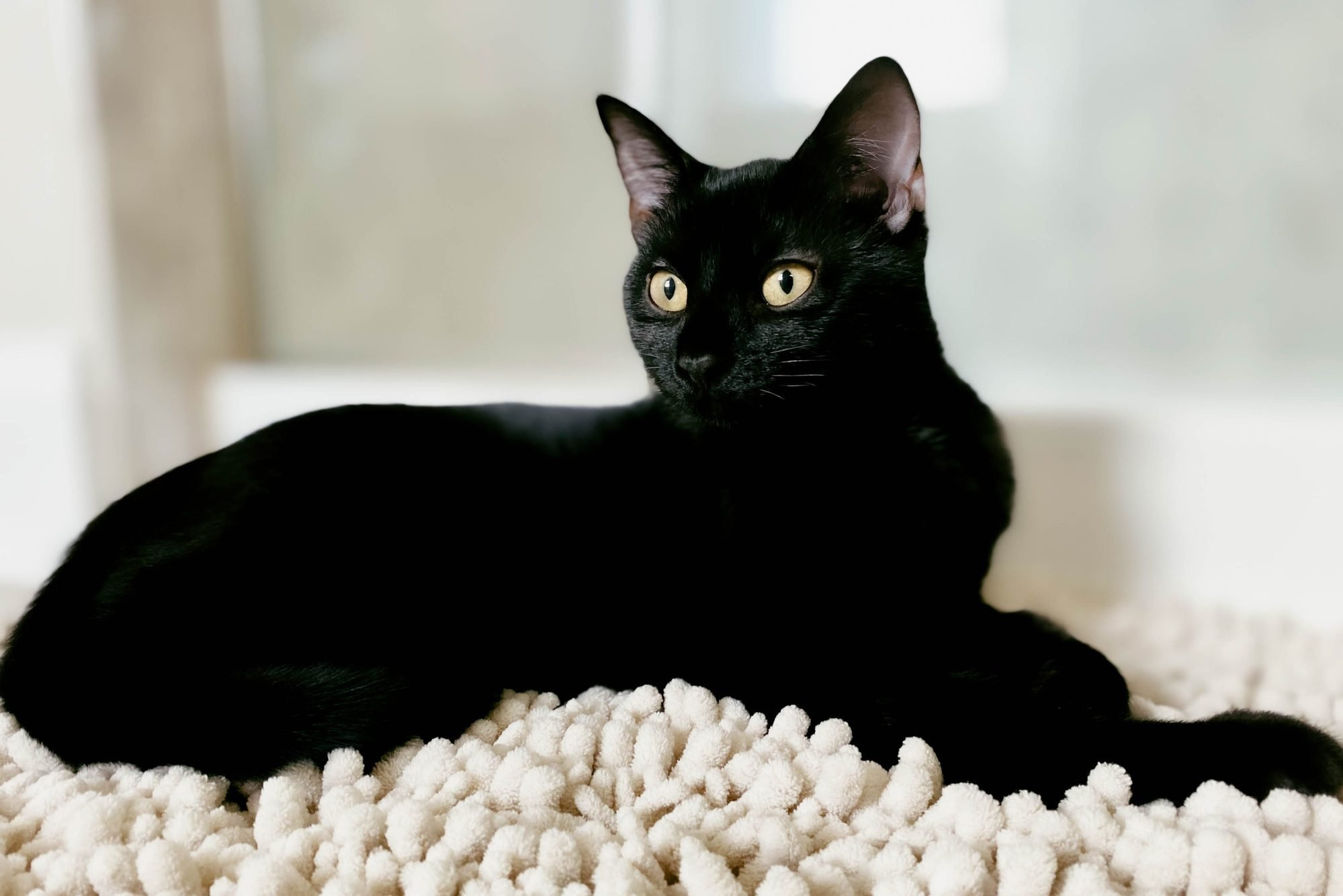 Close-Up of Black Kitten on Bathroom Rug with Eyes Wide Open