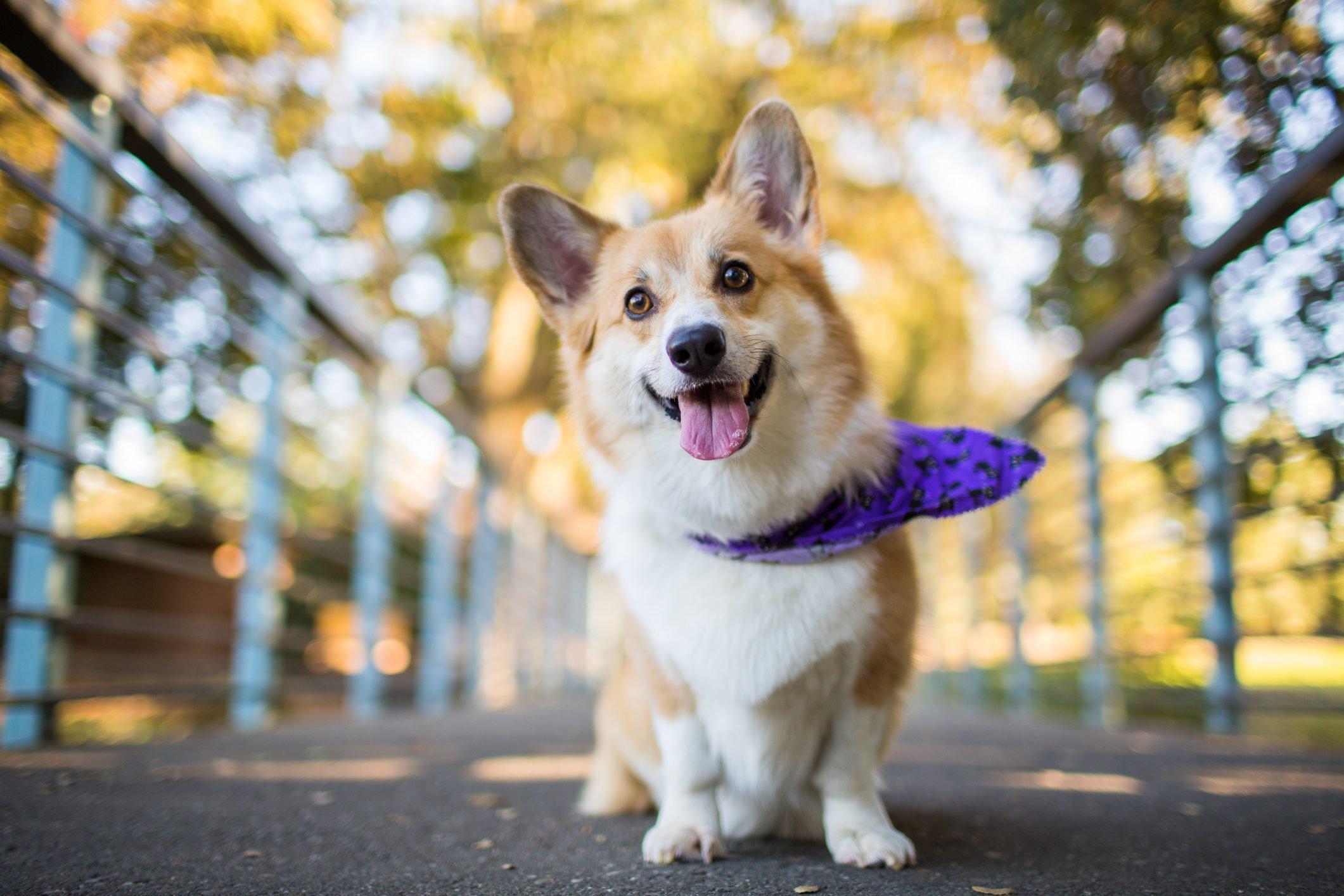 Smiling Dog with Bandana