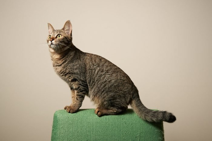 Cat standing in the back of the chair