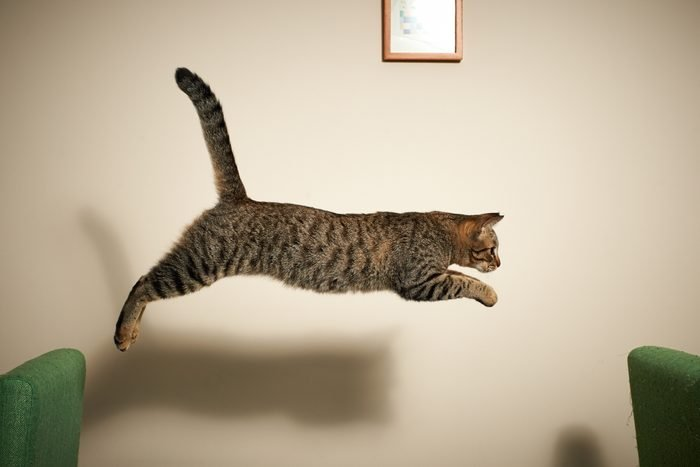 The cat jumping from chair to chair