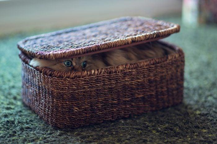 Persian cat in brown basket on green carpet