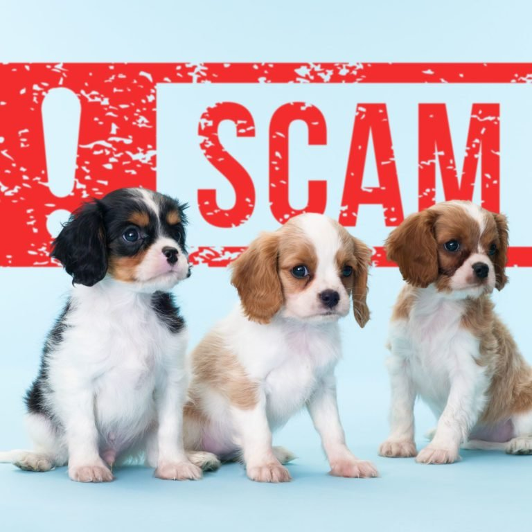 puppies on a blue background with a SCAM alert sign