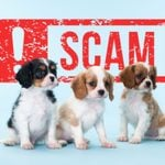 There's an Enormous Rise in Pet Scams: Here's How to Protect Yourself