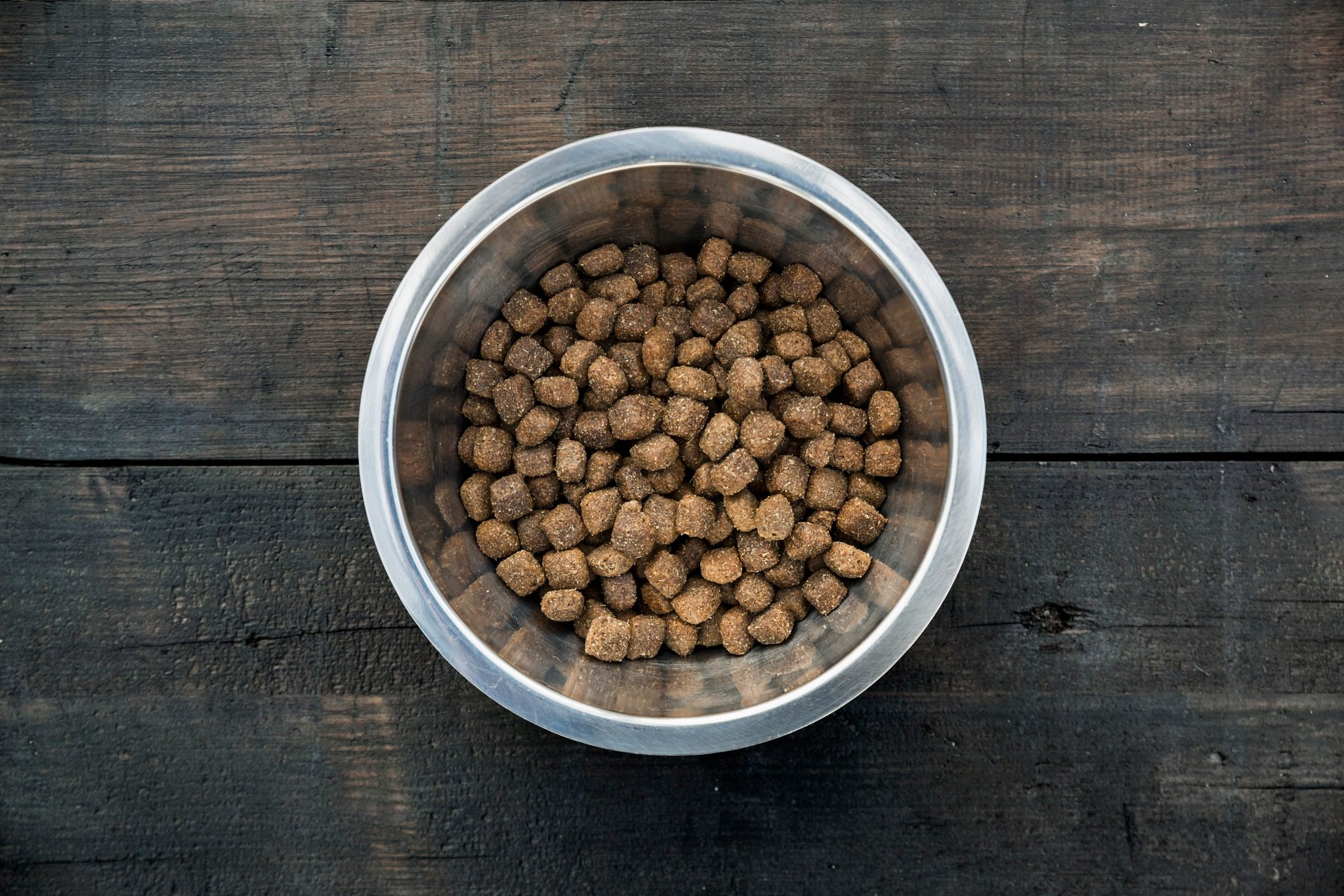 Bowl with dog food