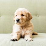The Ultimate Roundup of the 50 Cutest Dog Breeds as Puppies