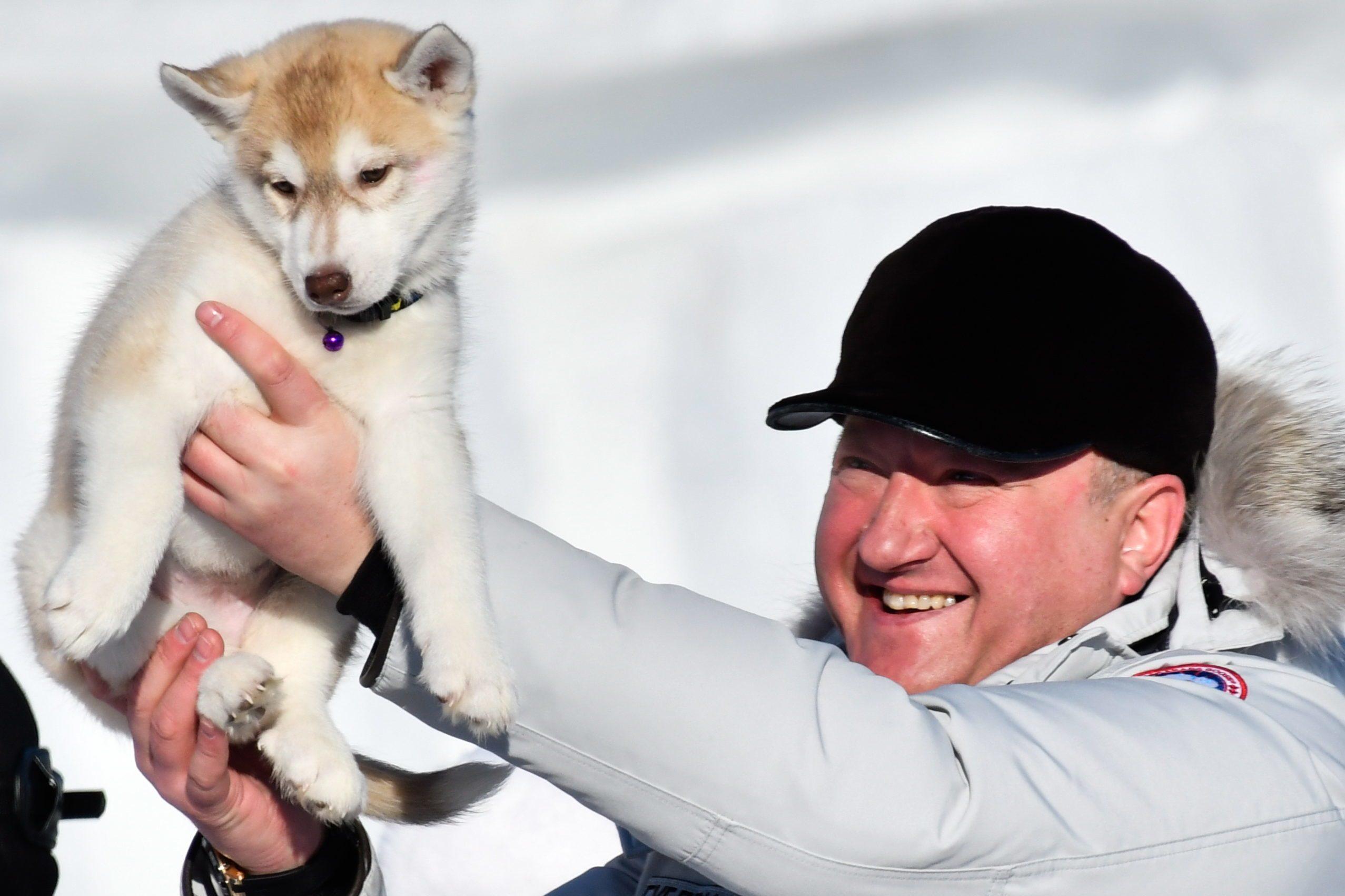 Beringia 2017 sled dog race in Kamchatka