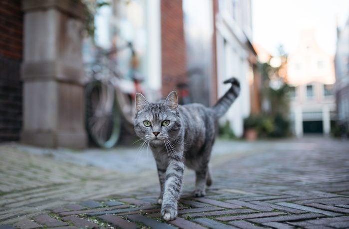 Portrait Of Cat Walking On Footpath