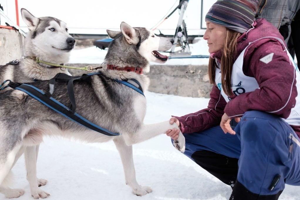 Lagonaki 2018 sled dog race in southern Russia