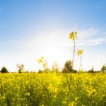 11 Things You Never Knew About the Spring Equinox