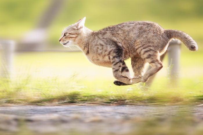 A cat running.