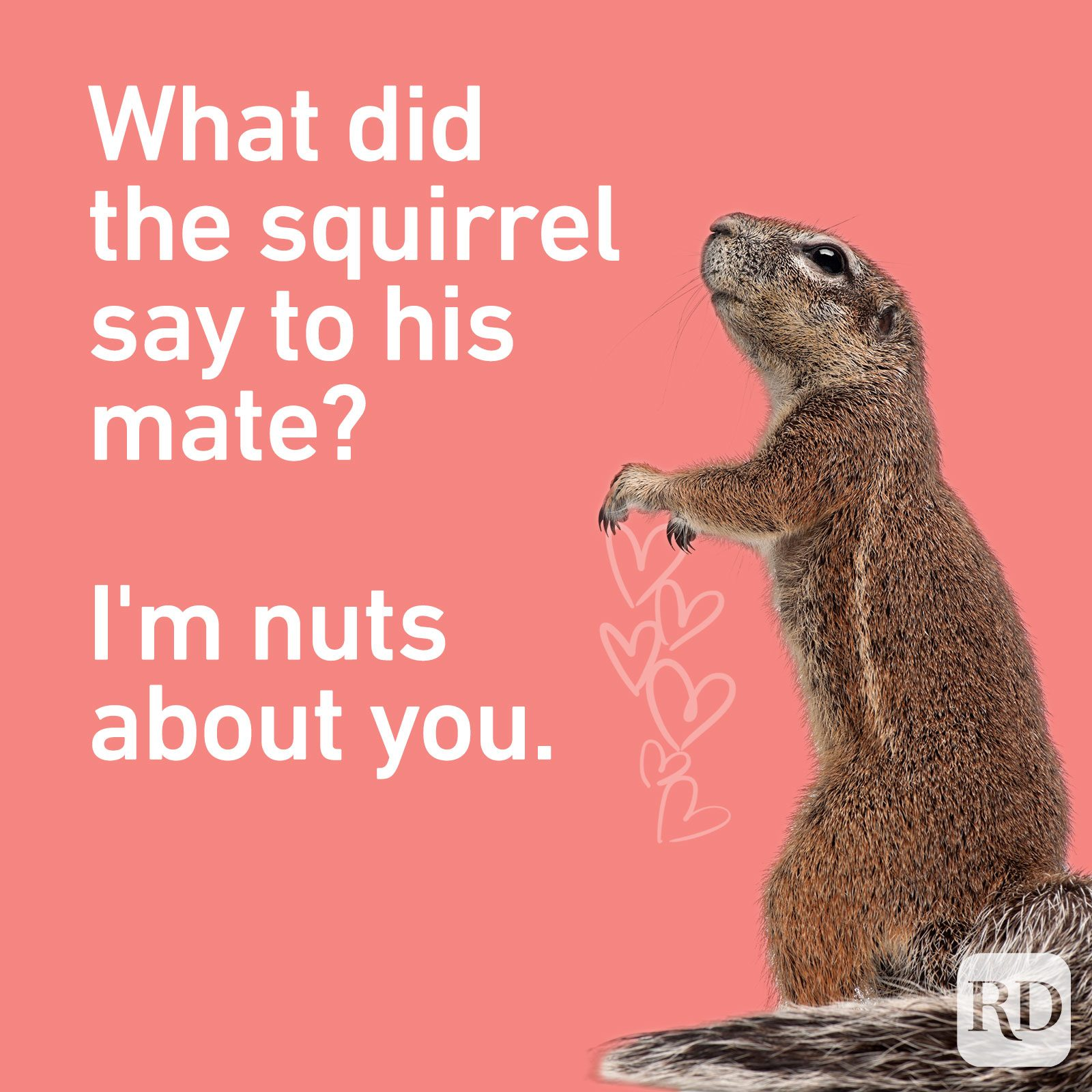 What did the squirrel say to his mate? I'm nuts about you.