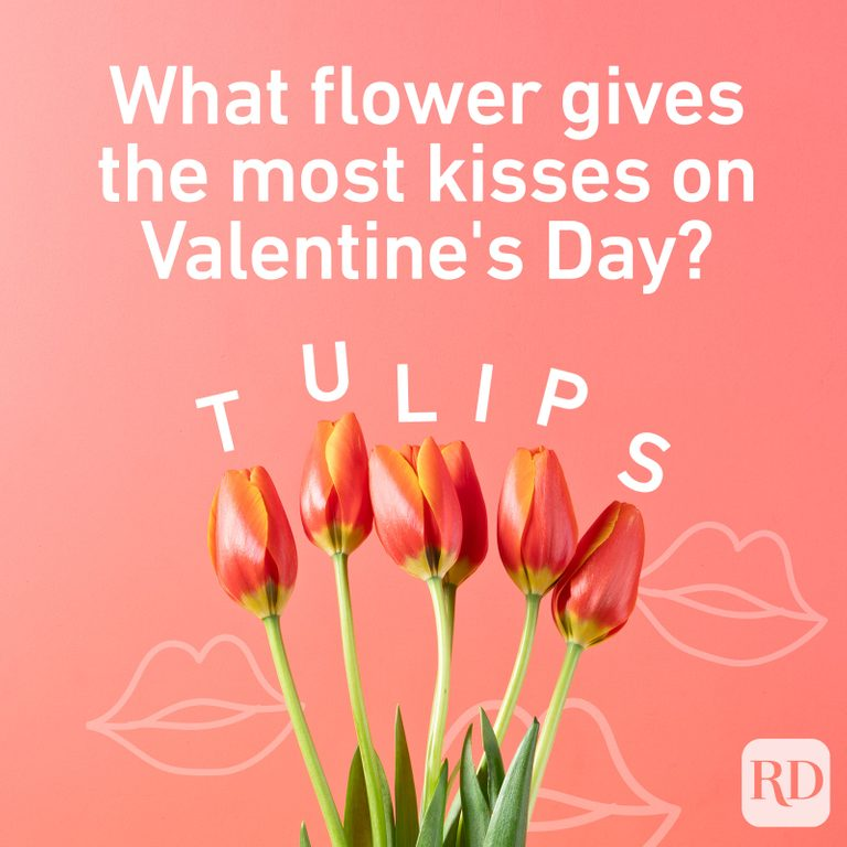 What flower gives the most kisses on Valentine's Day? Tulips.