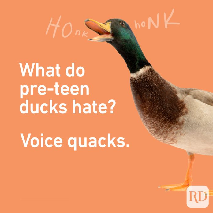 Teenjokes Quacks