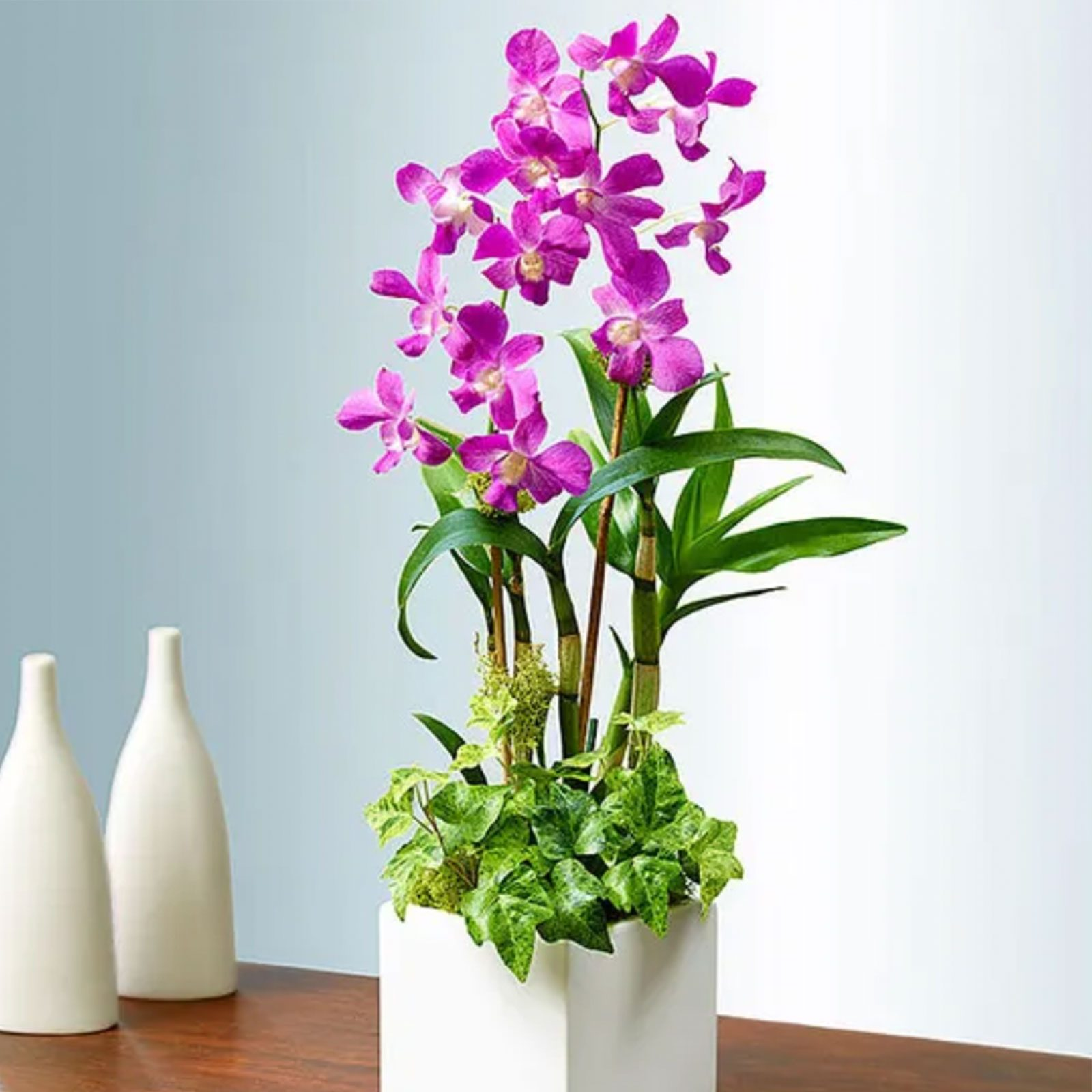 For traditional moms: Classic Dendrobium Dish Garden