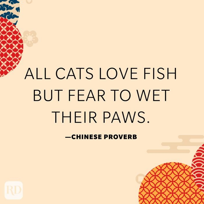 All cats love fish but fear to wet their paws.