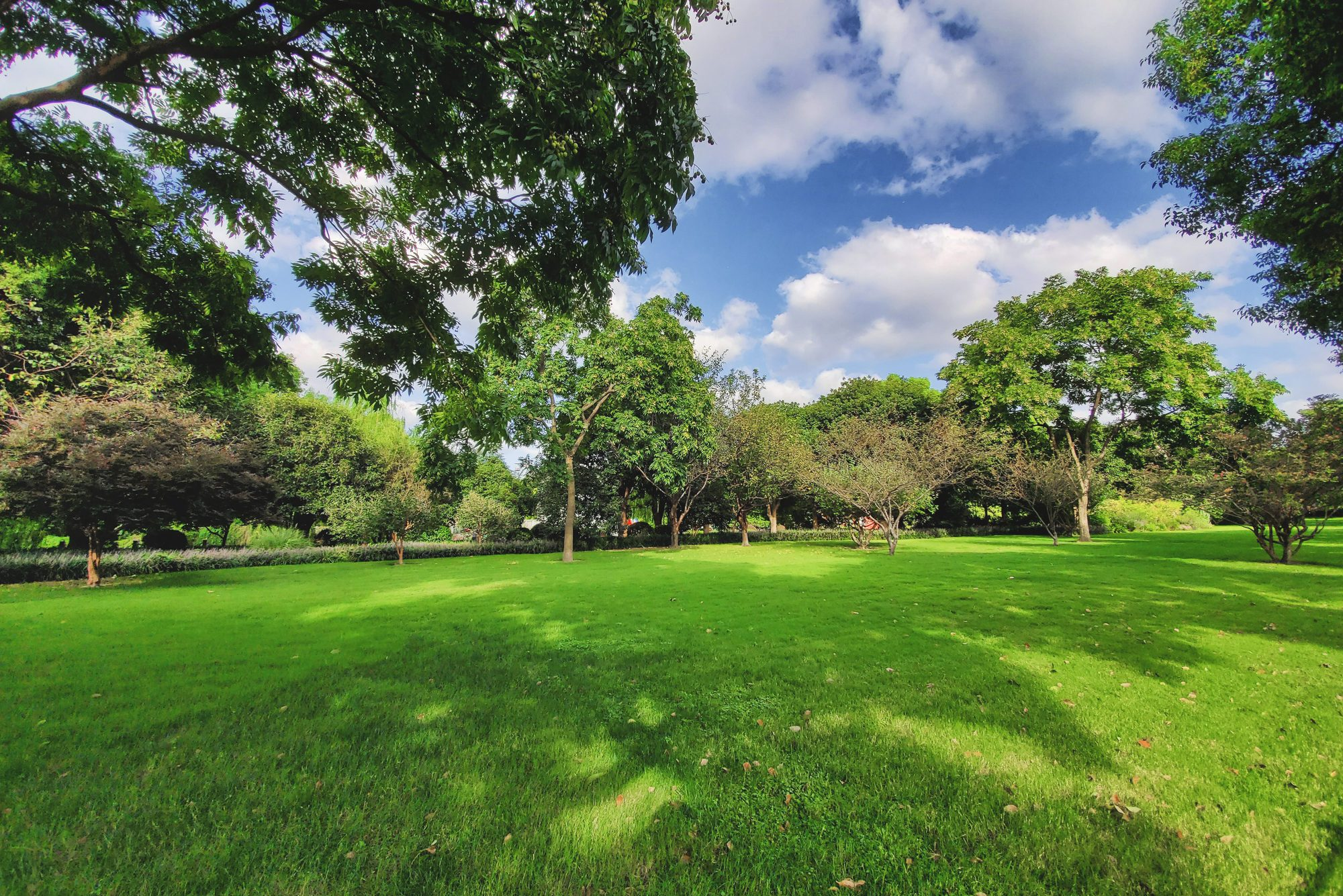 Lawn under the blue sky and white clouds in Hangzhou, China