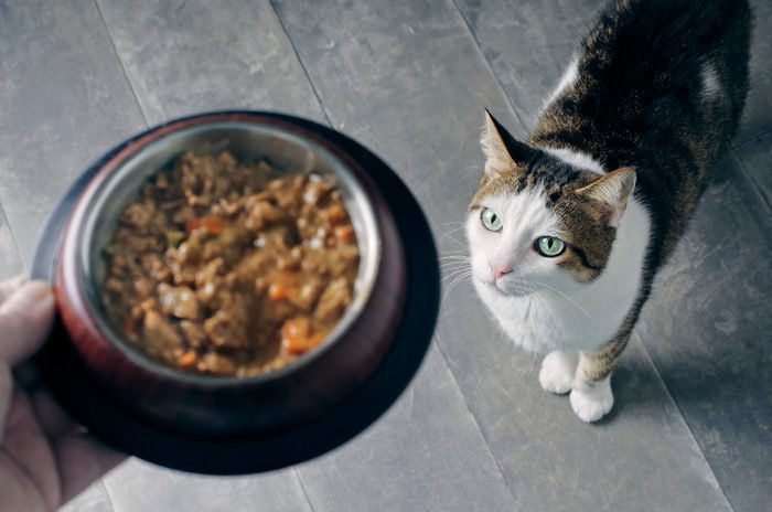 High Angle View Of Cat Looking At Food Bowl