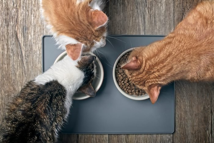Looking Down At Three Cats Eating From A Bowl