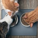 The Very Best Diet for Cats, According to Vets