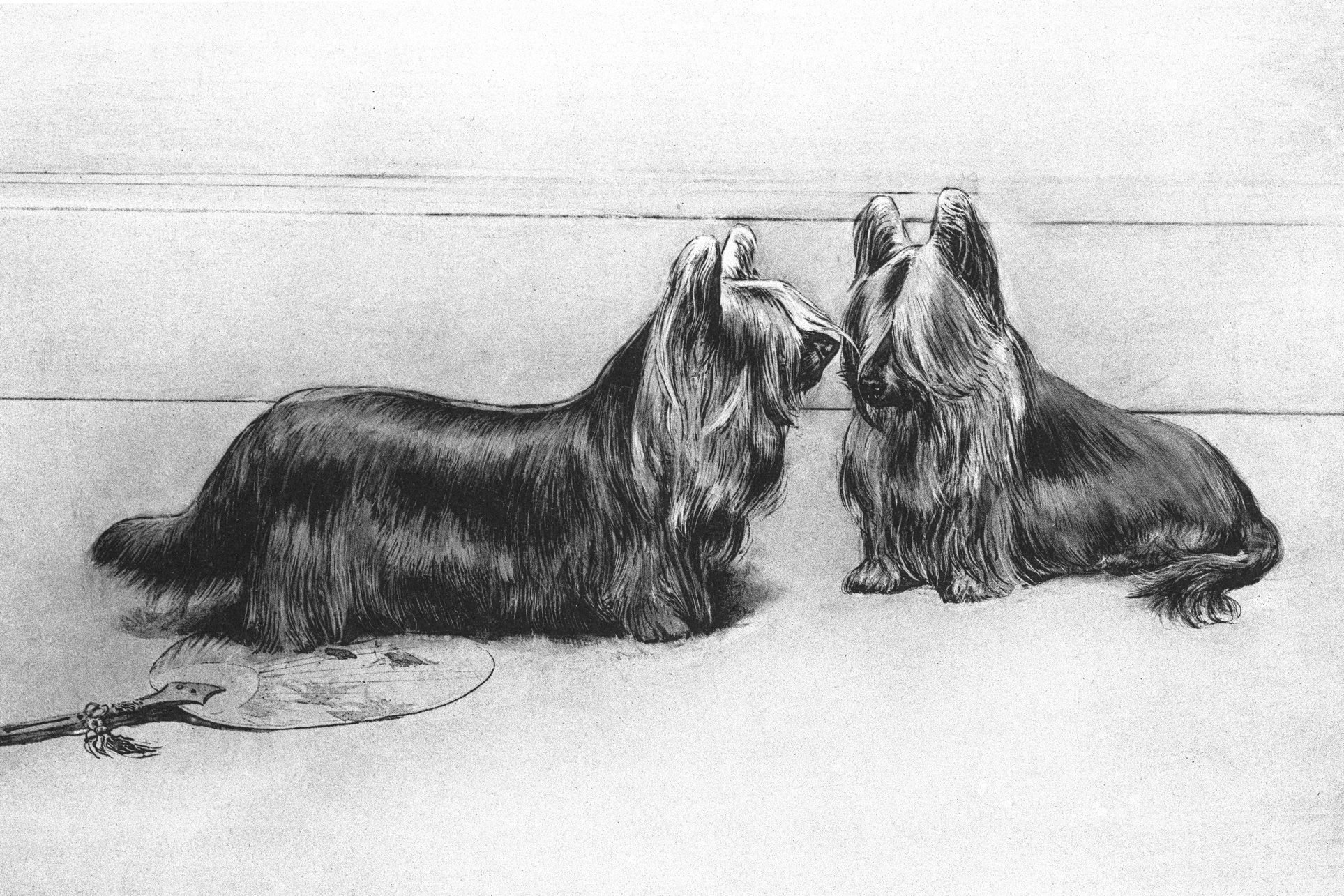 Old engraved illustration of The Clydesdale Terrier, The Paisley Terrier