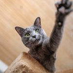 14 Best Small Cat Breeds for Every Family