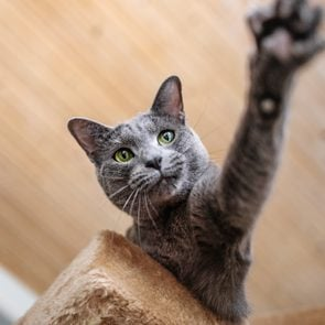 Low Angle View Of Cat Reaching From Atop Cat Tree,hakadal,norway