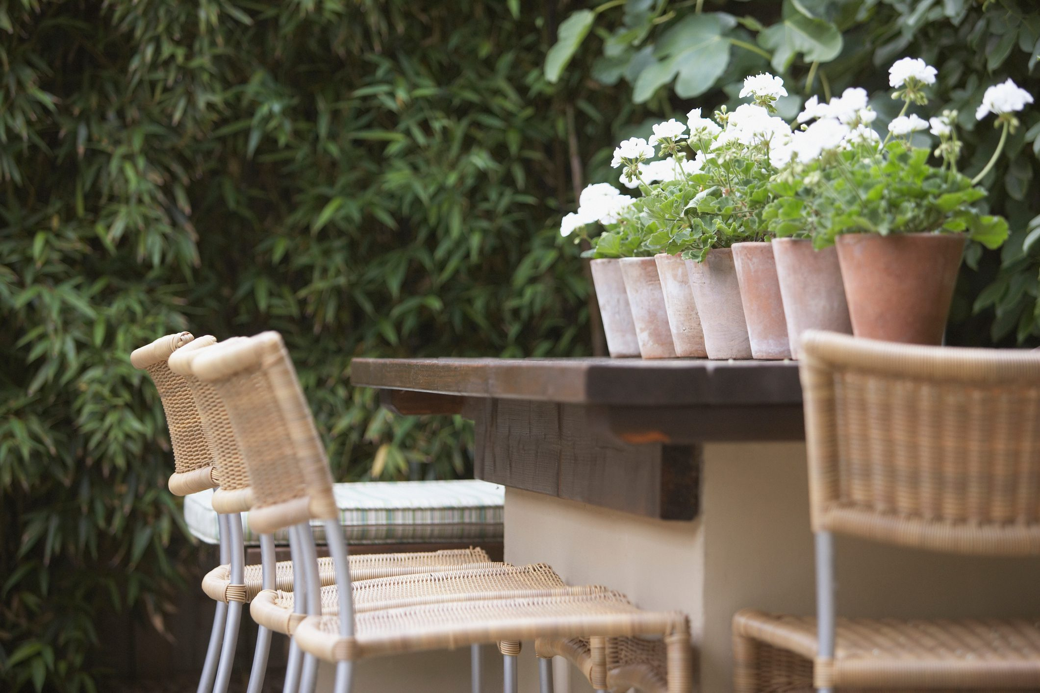 Outdoor bar with potted plants on it