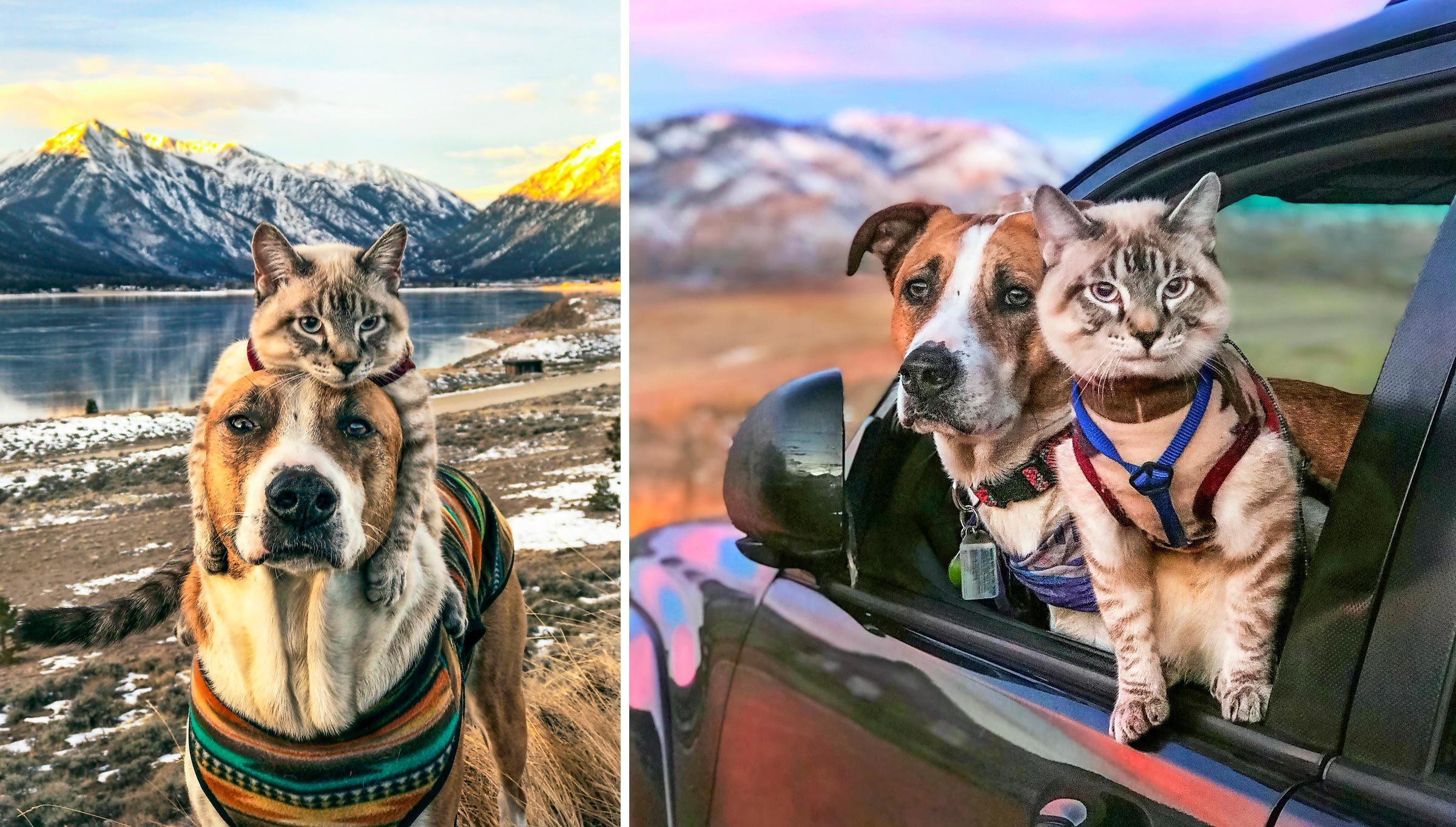 dog and cat travel and adventure companions