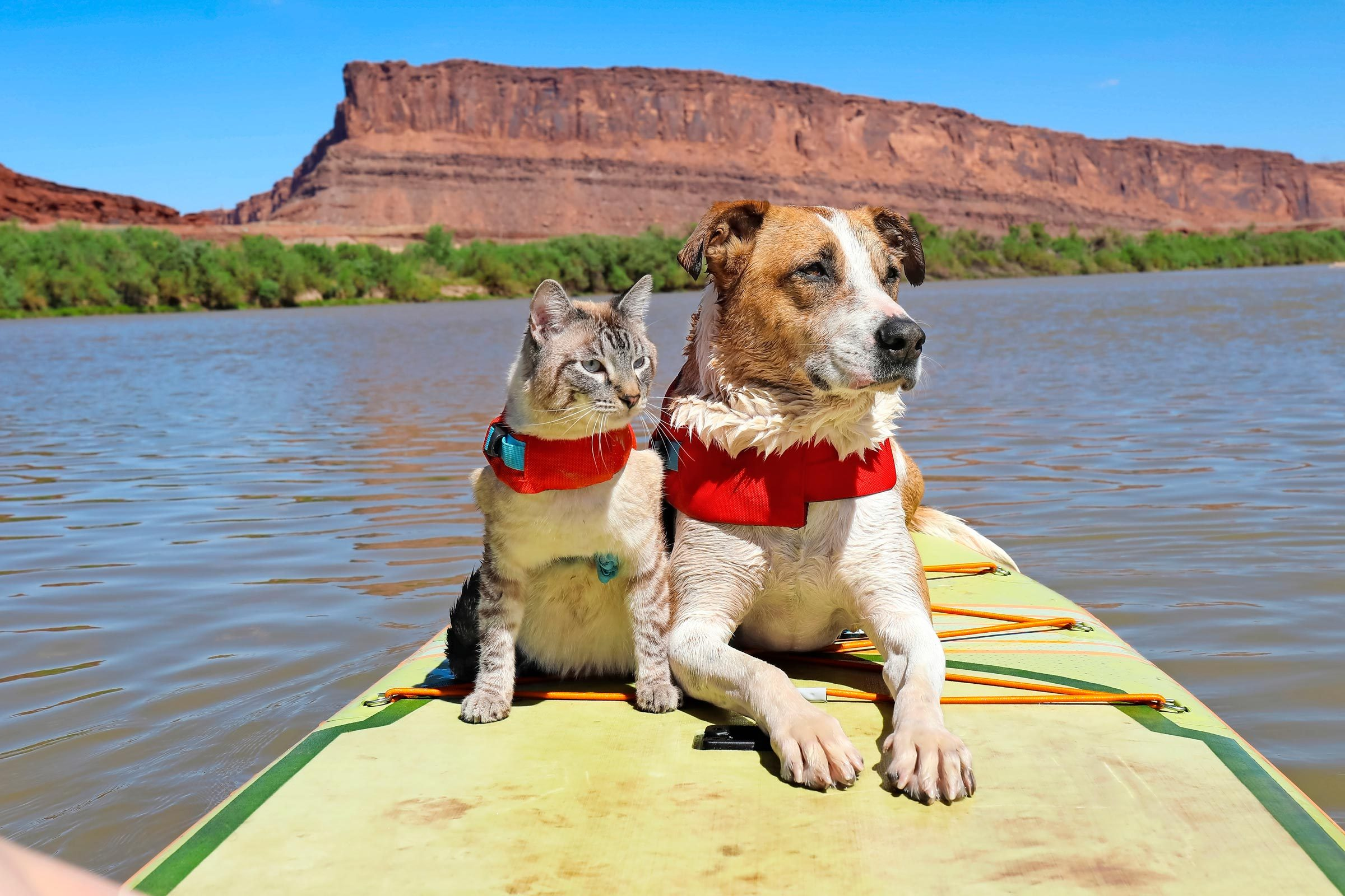 Henry And Baloo sitting on a paddleboard on utah's colorado river