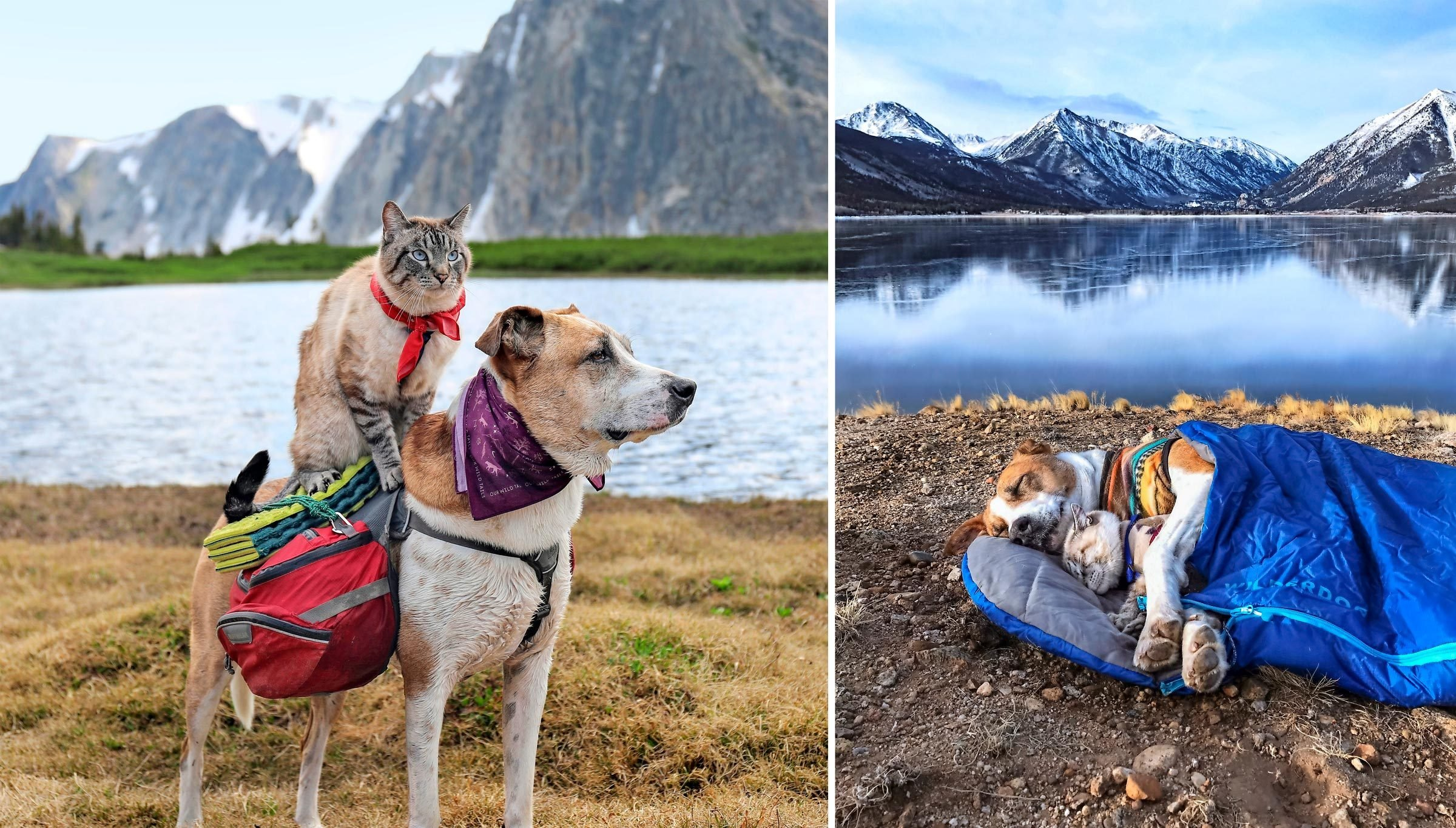 Henry with Baloo and a pack on his back; Henry and Baloo cuddle in a sleeping bag