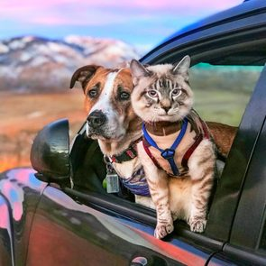 cat and dog sitting out the window of a car with mountains in the background