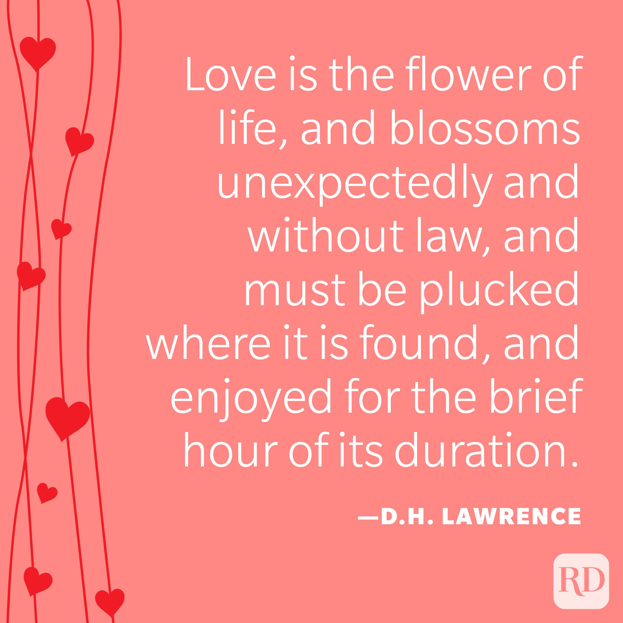 """""""Love is the flower of life, and blossoms unexpectedly and without law, and must be plucked where it is found, and enjoyed for the brief hour of its duration."""" —D.H. Lawrence"""
