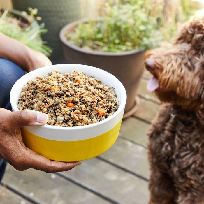 Pet plate dog food service