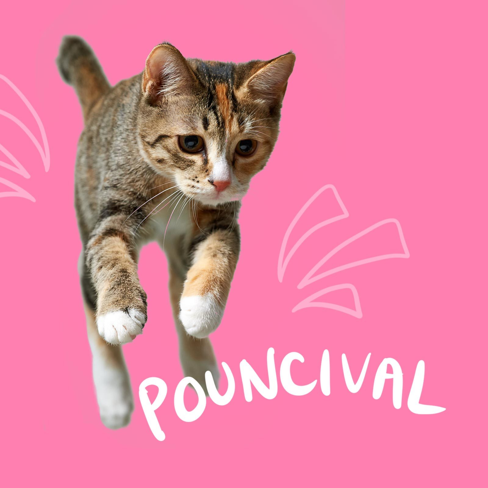 Jumping cat named Pouncival