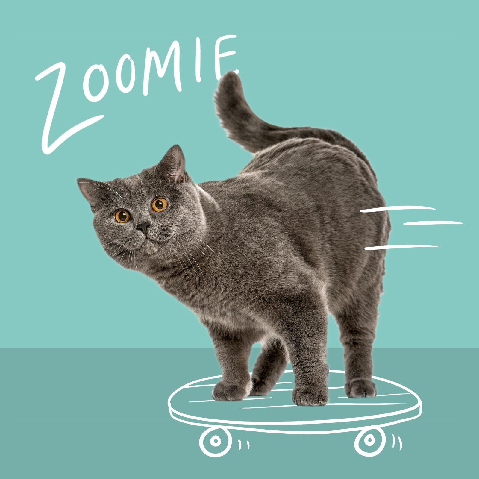 Cat riding a skateboard named Zoomie