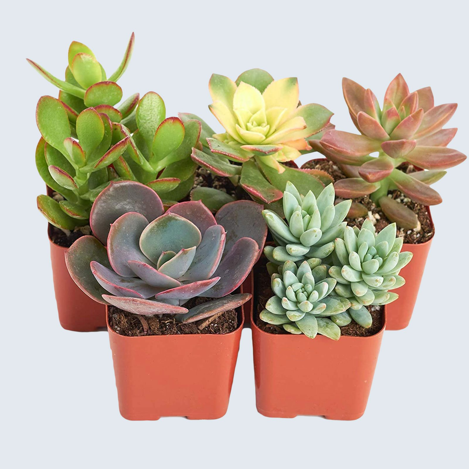 For the mom who lacks a green thumb: Shop Succulents Assorted Live Plants