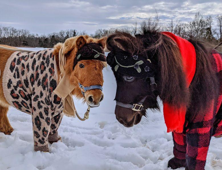 two horse friends in winter attire