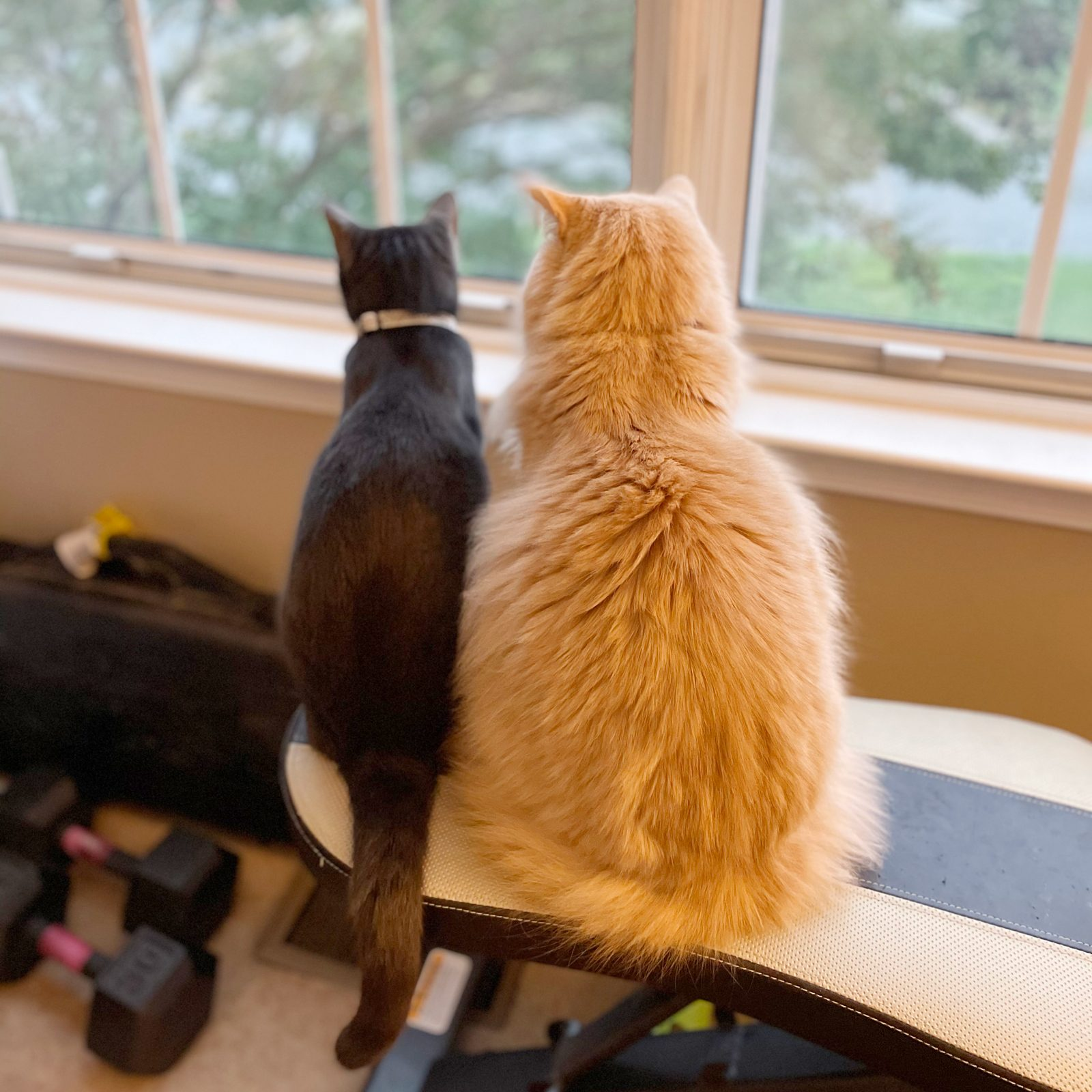 two cats sitting together; one is thin and dark, the other is large, fluffy, and orange