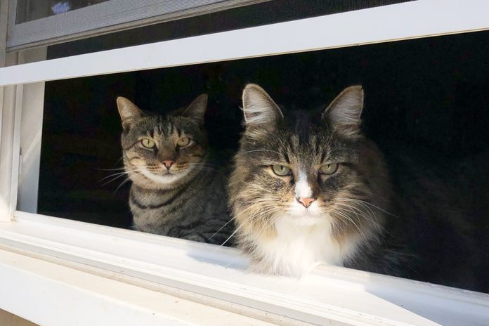 two cats looking out a windo