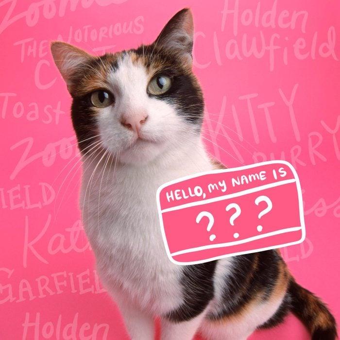 Cat Names Opener