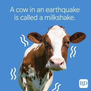 A cow in an earthquake is called a milkshake.
