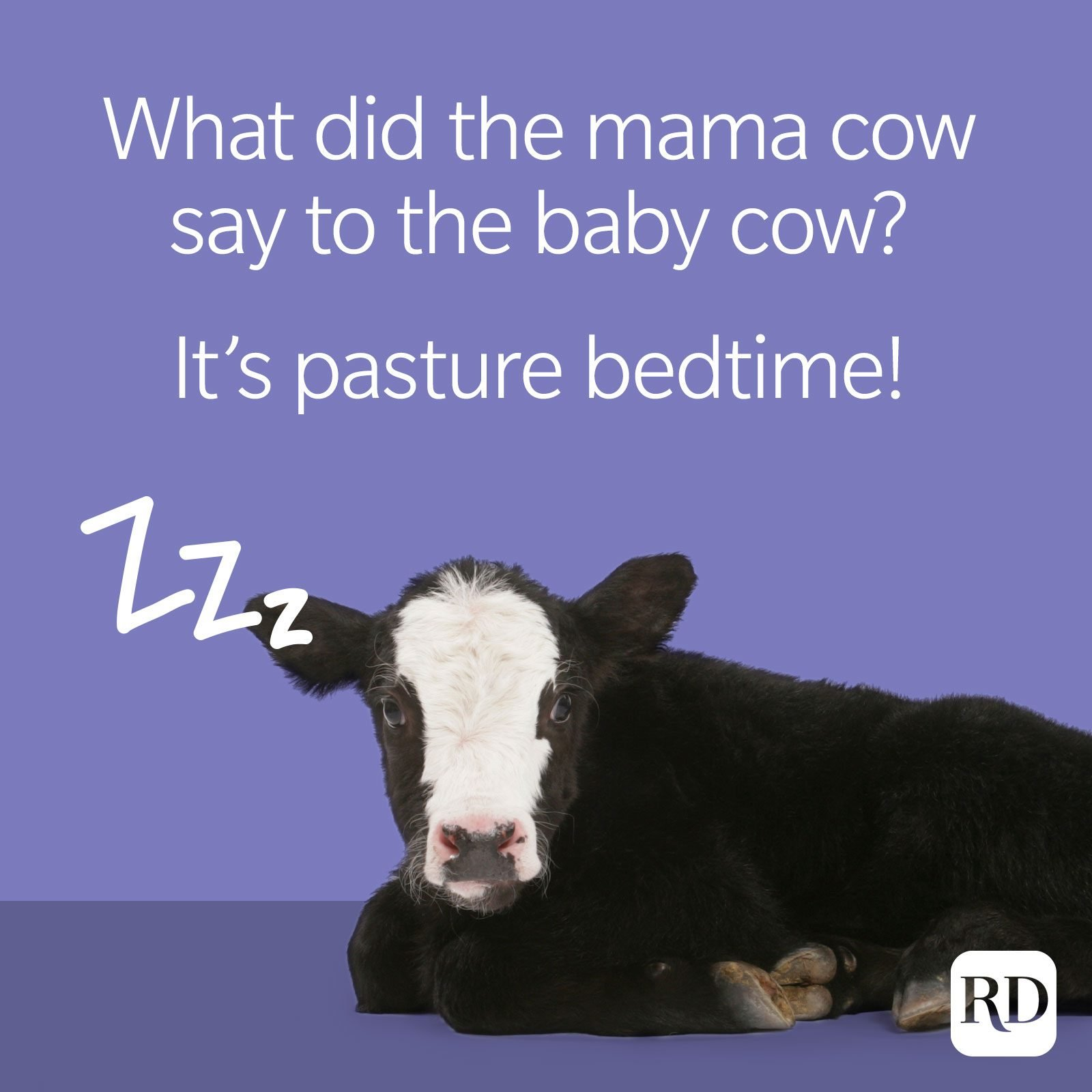 21. What did the mama cow say to the baby cow? It's pasture bedtime!