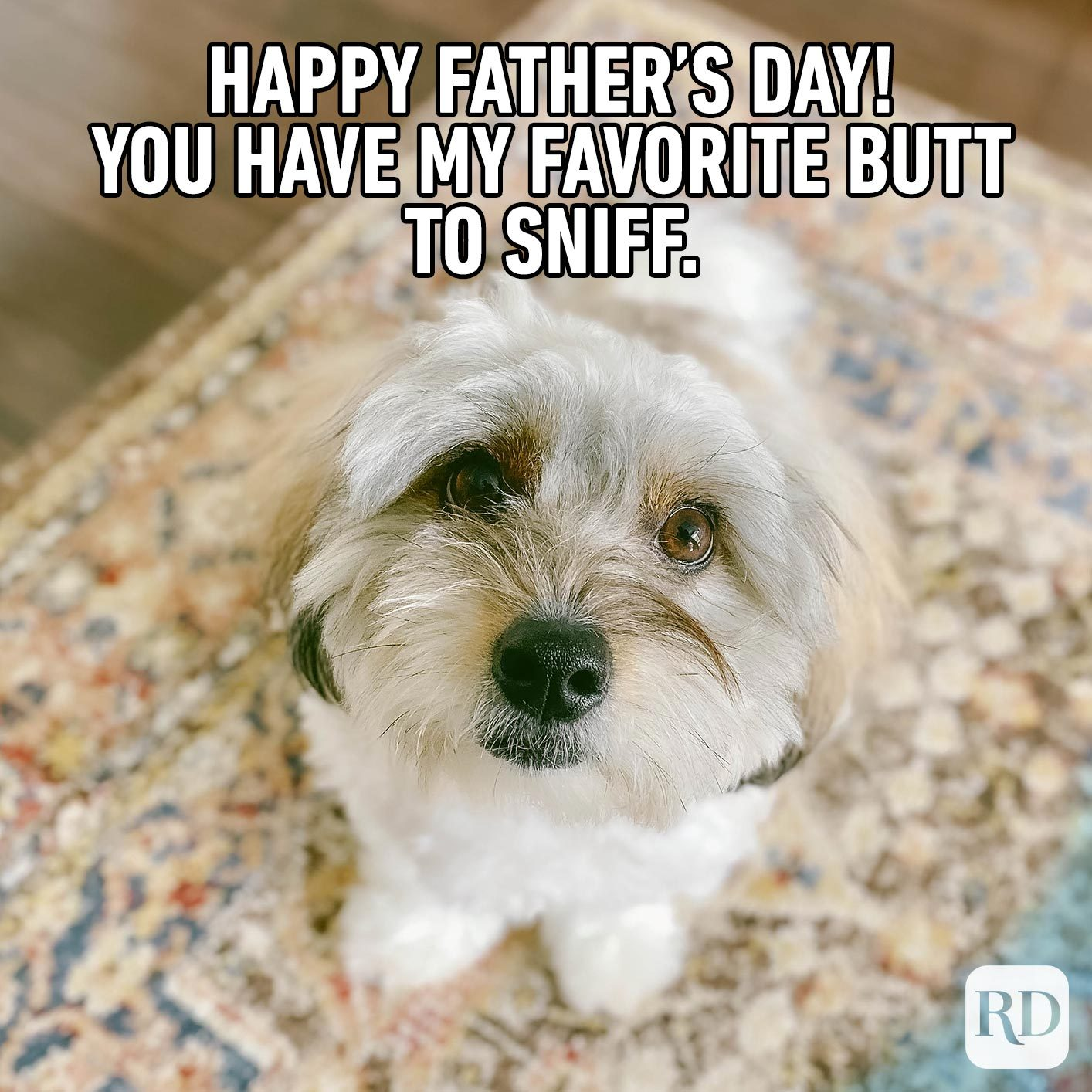 Scruffy dog. Meme text: Happy Father's Day! You have my favorite butt to sniff.