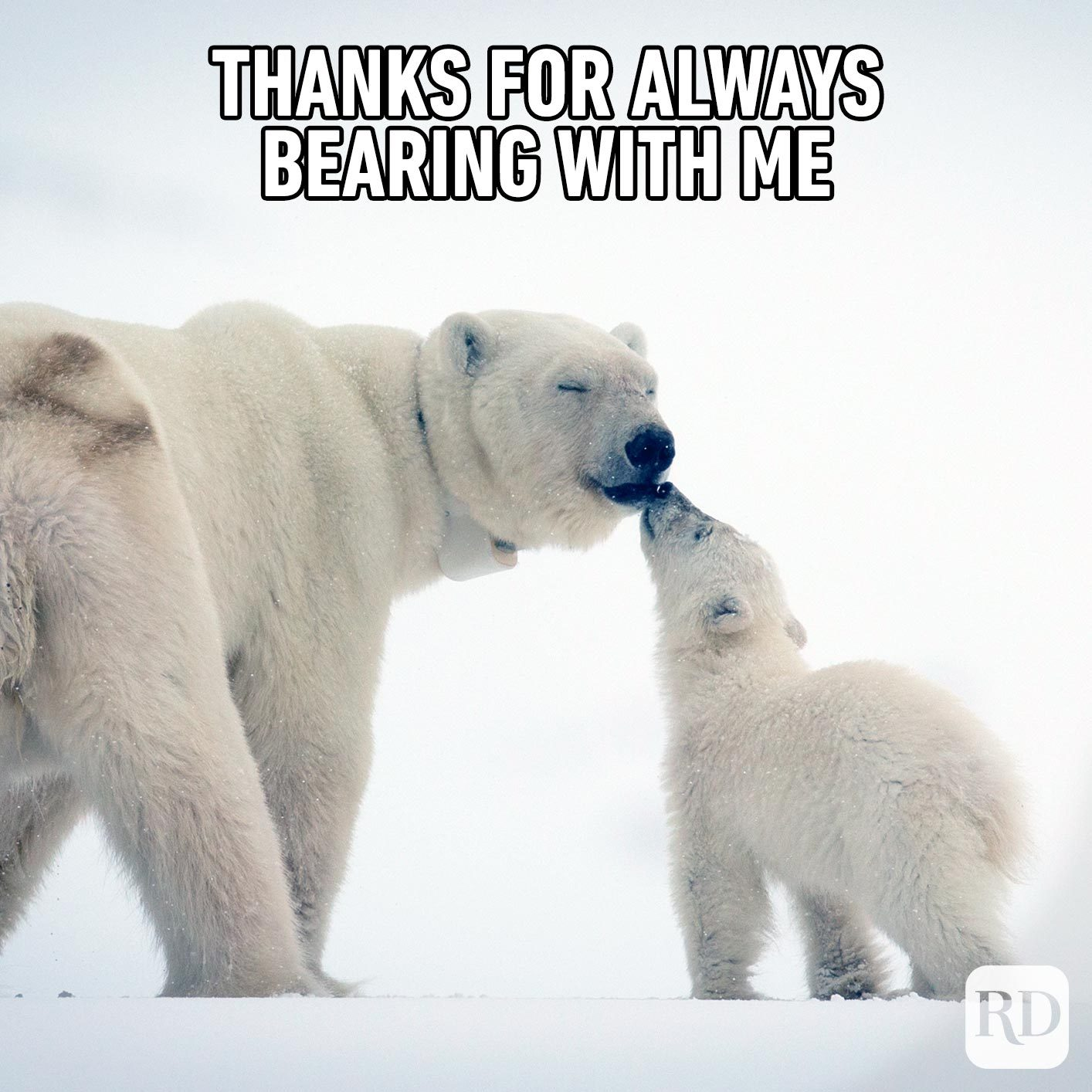 Polar bear father and child. Meme text: Thanks for always bearing with me