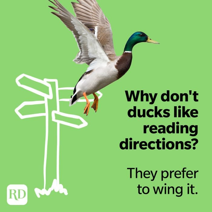 Why don't ducks like reading directions? They prefer to wing it.