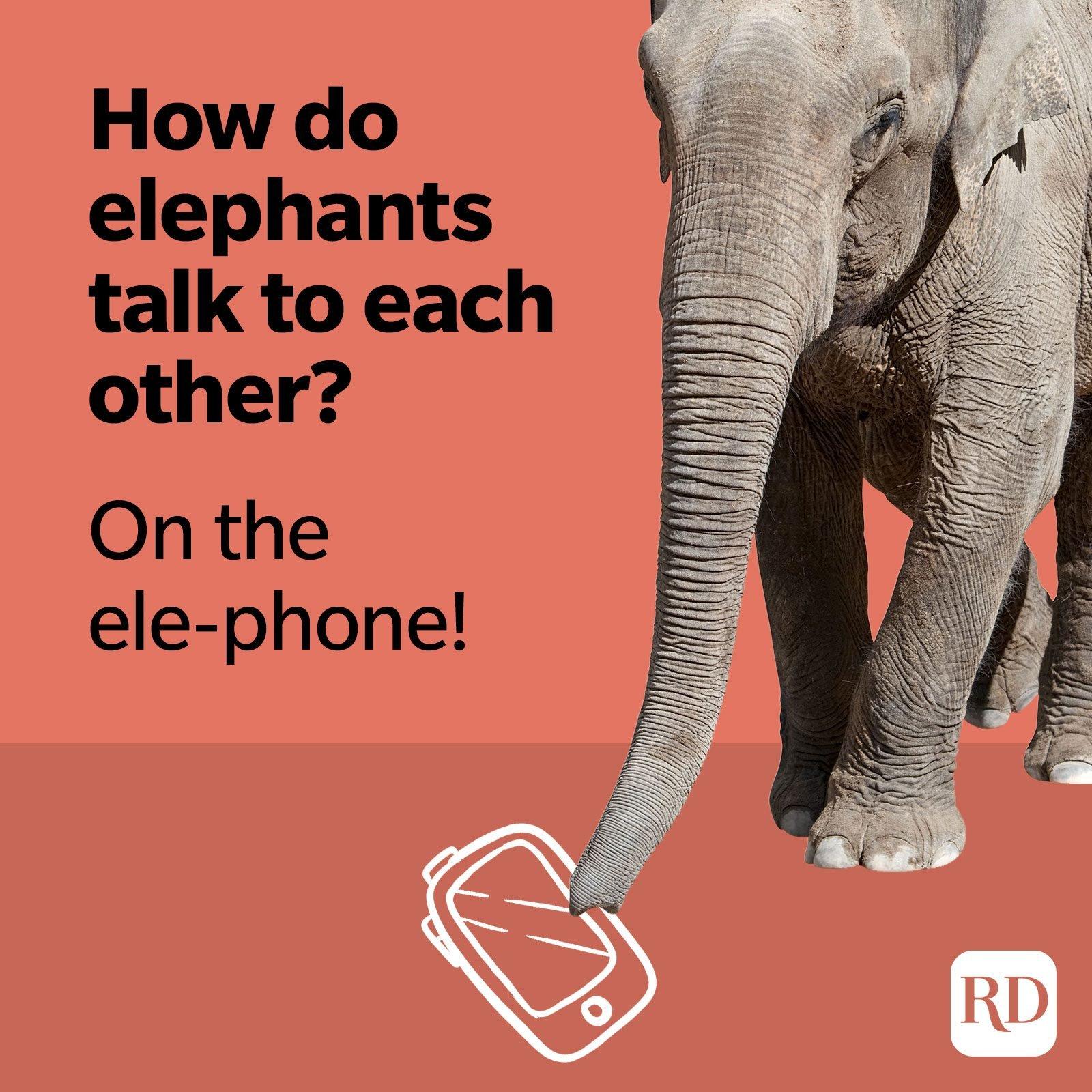 How do elephants talk to each other? On the ele-phone!
