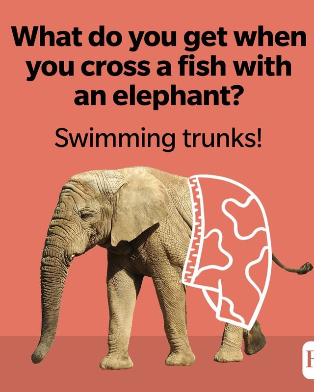 What do you get when you cross a fish with an elephant? Swimming trunks!
