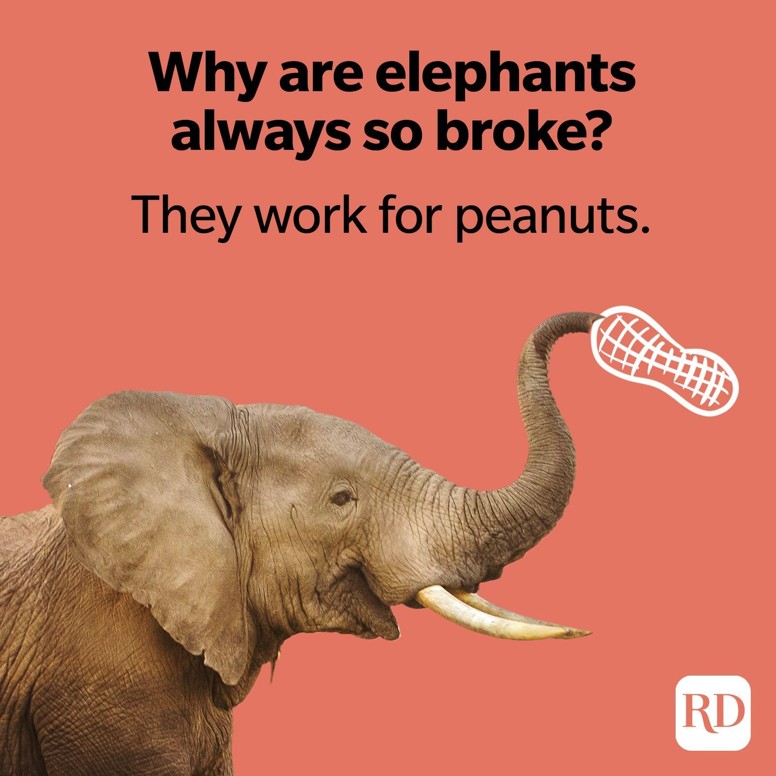 Why are elephants always so broke? They work for peanuts.