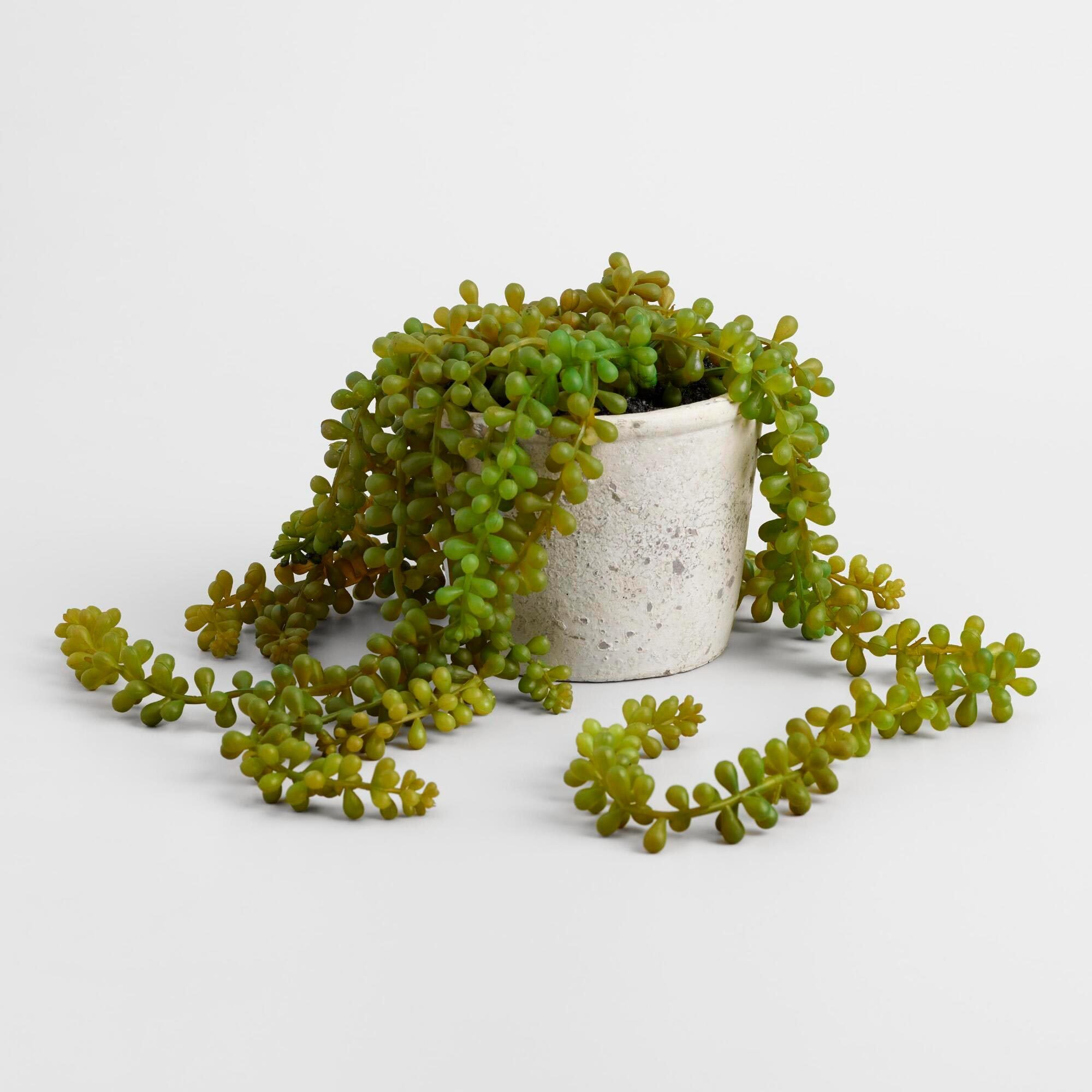 Faux String Of Pearls Plant In Textured Pot